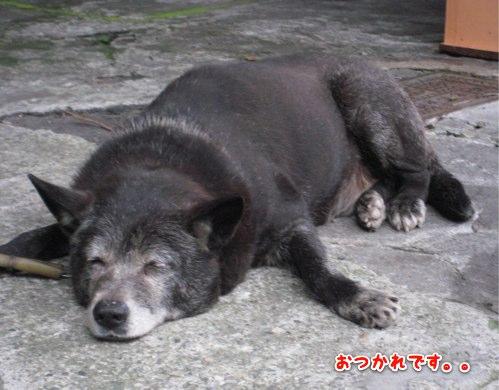 台湾の番犬
